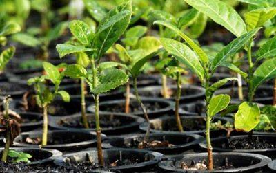 Brasil lança iniciativa Nutrientes Para a Vida