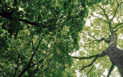 Sistema online ajudará a prevenir o desflorestamento