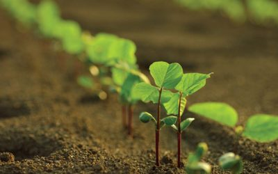 Dow AgroSciences lança Programa de Aplicação Responsável para Agricultura Familiar