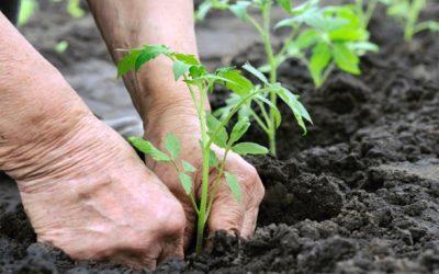 Dow AgroSciences lança Programa de Aplicação Responsável para Hortifruti