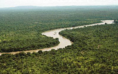 Plataforma brasileira permitirá diagnóstico sobre biodiversidade