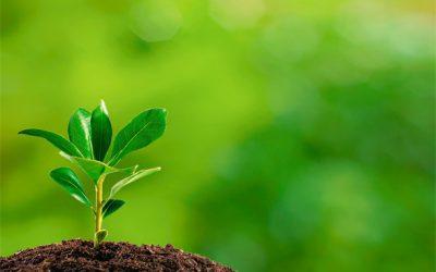 Startup usa materiais reciclados para manter hortas em tetos de edifícios