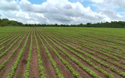Queda no Índice de Confiança do Agronegócio não afetou o patamar elevado de otimismo