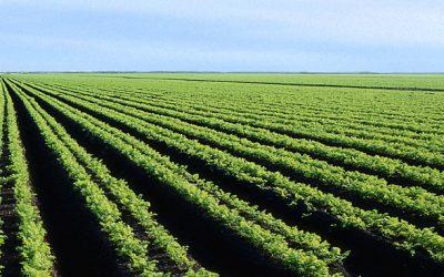 PIB-volume do agronegócio cresce 7,6% em 2017