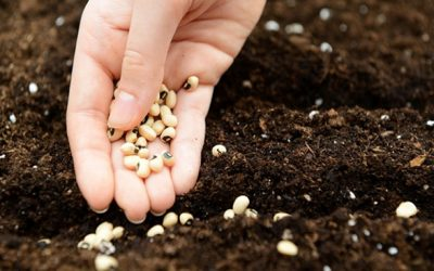 Mulheres têm papel cada vez mais importante no Agro