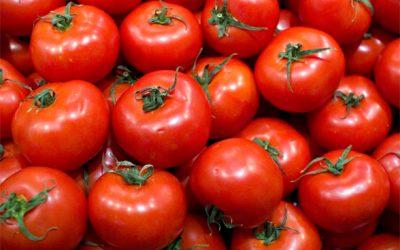 Pesquisa identifica molécula que permite frutificação de tomates sem sementes