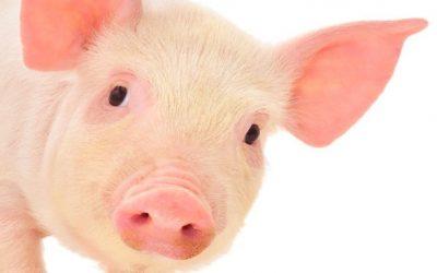 Mapa oficializa medidas para apoiar a saúde animal