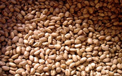 Produção de 225,6 milhões de toneladas de grãos é a segunda maior da história