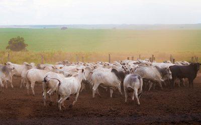 Pesquisa inédita vai traçar cenário de prioridades da pecuária de corte brasileira