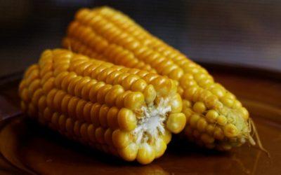 Brasil vai importar milho para suprir mercado agroindustrial