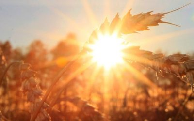 País pode ganhar novo marco para o setor agropecuário