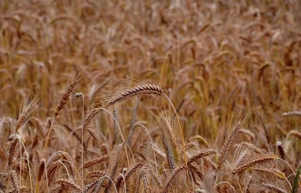 Safra de grãos tem redução de 3,4% em relação à safra anterior aponta CONAB