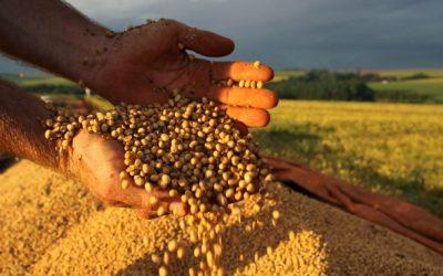 Safra de grãos deve alcançar 228,5 milhões de toneladas