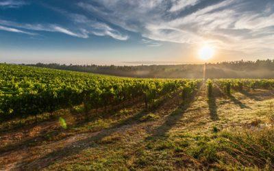 Recuperação da agroindústria deve elevar PIB agro em 2018