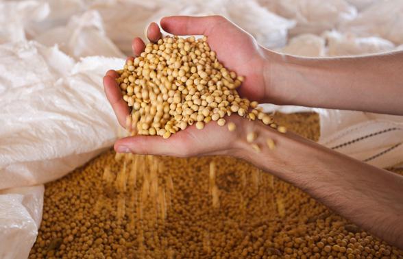 Valor da Produção Agropecuária é de R$ 563,5 bilhões