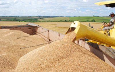 Valor da Produção Agropecuária é de R$ 578,2 bilhões