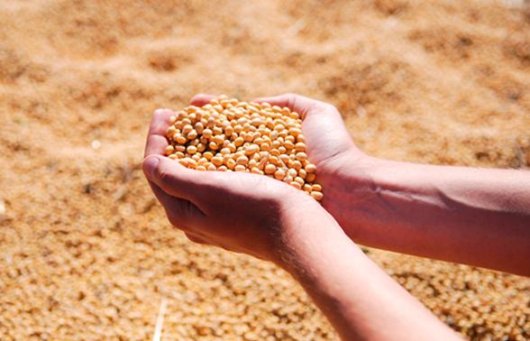 Conab estima que produção de grãos será de 237,3 milhões de toneladas