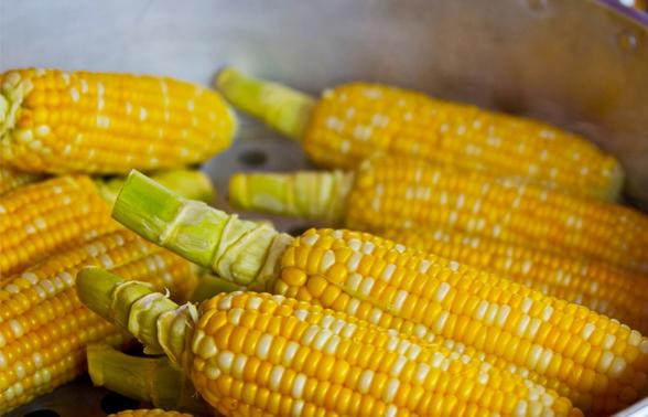 Conab prevê recuperação do milho e estima safra em 233,3 milhões de toneladas