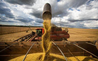Conab mostra que produção de soja e área de milho levam à supersafra de grãos