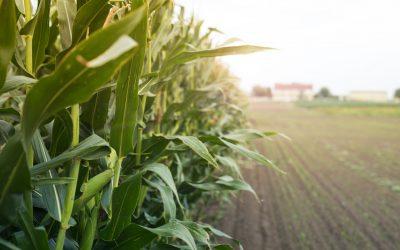 Conab verifica influência de clima nas culturas de 2ª safra e produção deve chegar a 262,13 milhões de toneladas