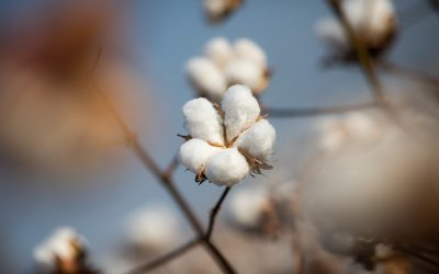 Conab confirma redução na produção de grãos no último levantamento da safra 2020/21
