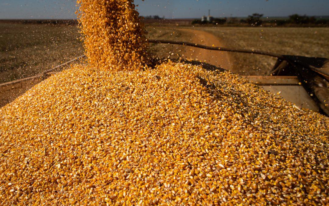 Levantamento da Conab indica um volume de produção de 288,61 milhões de toneladas de grãos na safra 2021/22